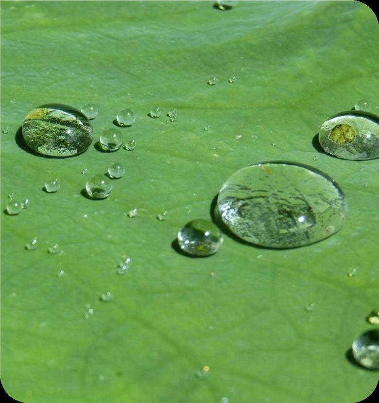6_lotus